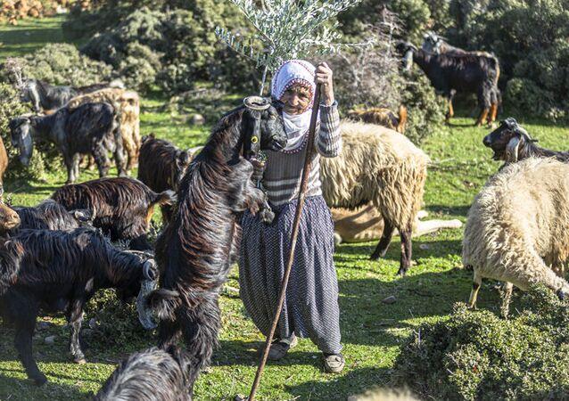 Hatay'ın Hassa ilçesinde yaşayan 66 yaşındaki Fatma Mazı, 16 yaşından bu yana Amanos Dağları eteklerinde çobanlık yaparak ailesini geçindiriyor.