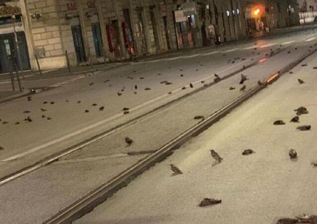 Roma'da yeni yıl kutlamalarında kullanılan havai fişekler yüzlerce kuşun ölümüne neden oldu