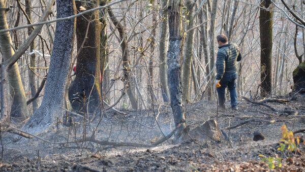 Ordu'nun Ünye ilçesinde sigara izmaritinin neden olduğu örtü yangınında 20 dönümlük arazi kül oldu. - Sputnik Türkiye