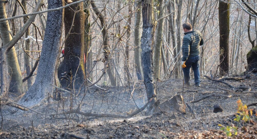 Ordu'nun Ünye ilçesinde sigara izmaritinin neden olduğu örtü yangınında 20 dönümlük arazi kül oldu.