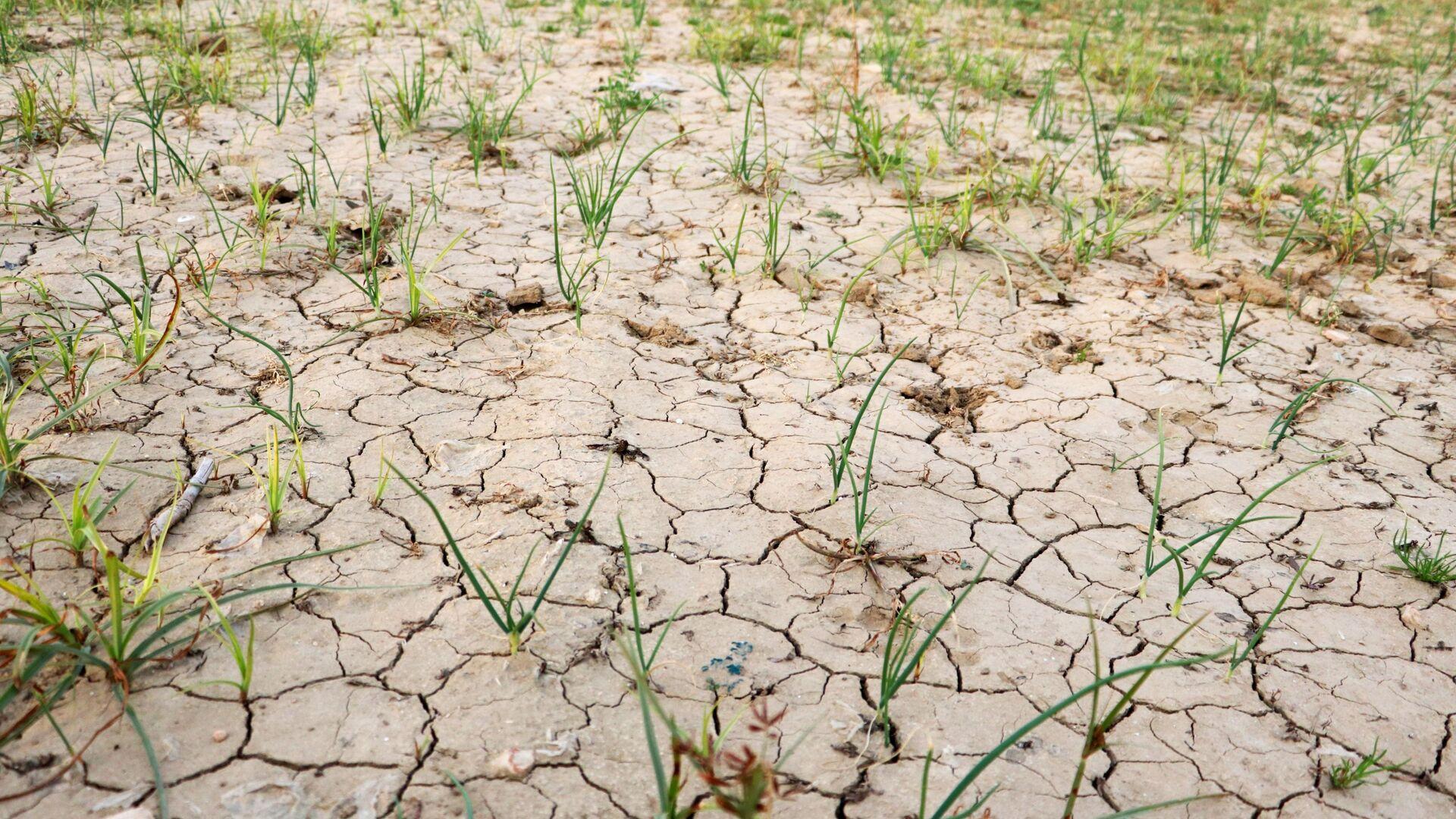 Adana'da son 92 yılın en kurak kışı yaşanıyor - Sputnik Türkiye, 1920, 09.09.2021