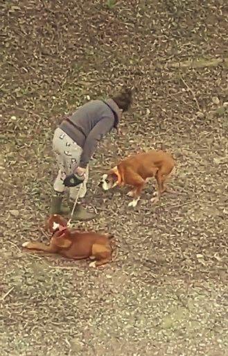 Antalya'da biri tasmalı iki köpeğini eline aldığı sopayla döven kadın, ifadesi alınmak üzere polis merkezine götürüldü. Köpeklerini kediye saldırdığı için dövdüğünü savunan kadına mala zarar verme suçundan adli işlem yapıldı.