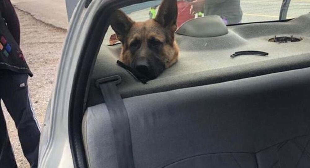 Bagajda taşınan köpeğin başı hoparlör boşluğuna sıkıştı