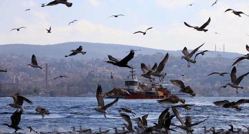 İstanbul - Boğaz - martı - balıkçı teknesi