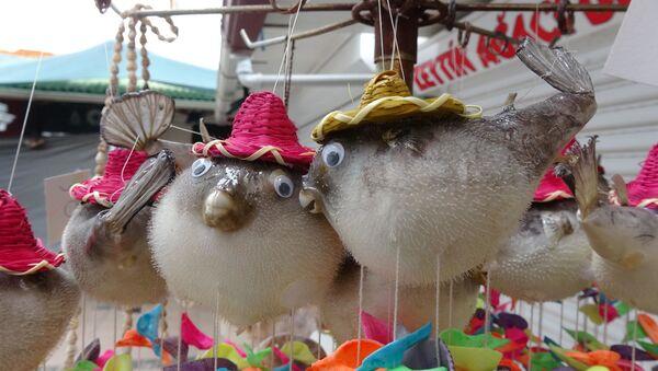 Zehirli balon balığı süs eşyası olarak satılıyor - Sputnik Türkiye