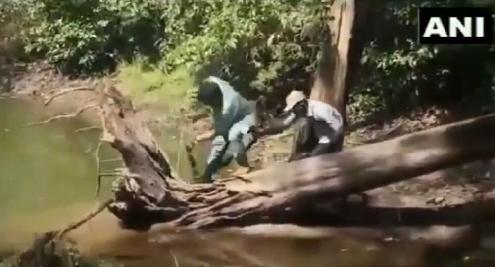 A reptile expert narrowly escapes being bitten by a Cobra snake while trying to catch the animal