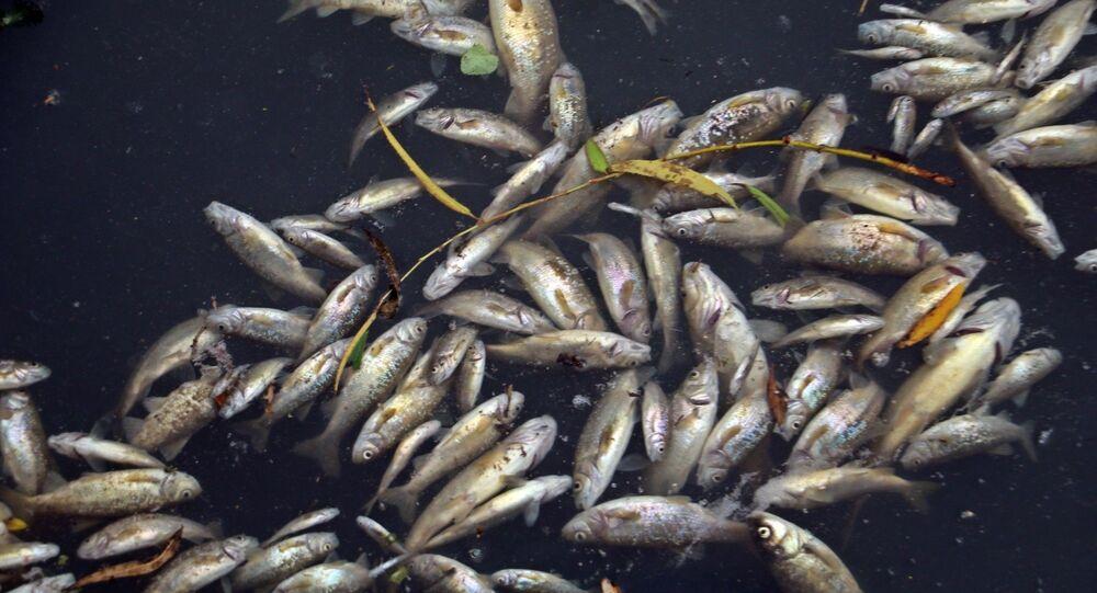 Antalya'da binlerce balığın ölümüyle ilgili Valilik talimatıyla Düden Çayı ve civarlarında 5 adet atık geri kazanım tesisinde denetim yapıldı.