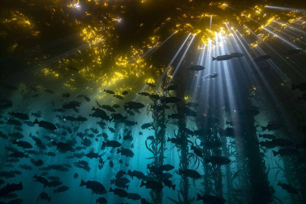 Yarışmanın Soğuk Sular kategorisinin birincisi fotoğrafçı Jon Anderson'un çalışması