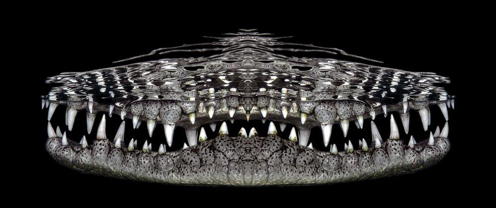 Yarışmanın Su Altı Sanatı kategorisinin kazananı Jenny Stock'un Timsahın Gülümsemesi isimli fotoğrafı
