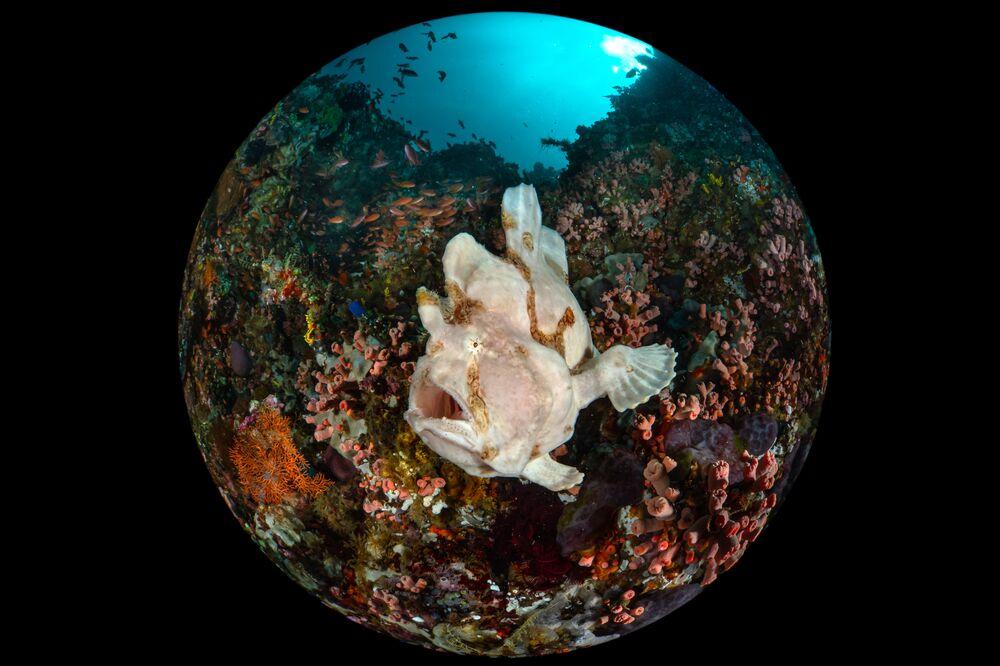 Yarışmanın Kompakt Geniş Açı kategorisinde birinci seçilen fotoğrafçı  Enrico Somogyi'nin Dev Kurbağa Balığı çalışması