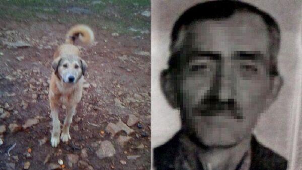 fazla ekmek yiyor diye köpeğini vurarak öldüren kişi - Sputnik Türkiye