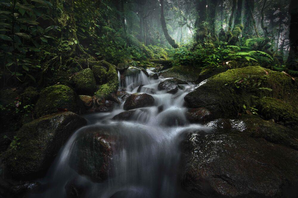 Yarışmanın Uzun Pozlama kategorisinde dereceye giren fotoğrafçı Muhammad Hary'nin 'Borneo'daki Yağmur Ormanı' başlıklı çalışması