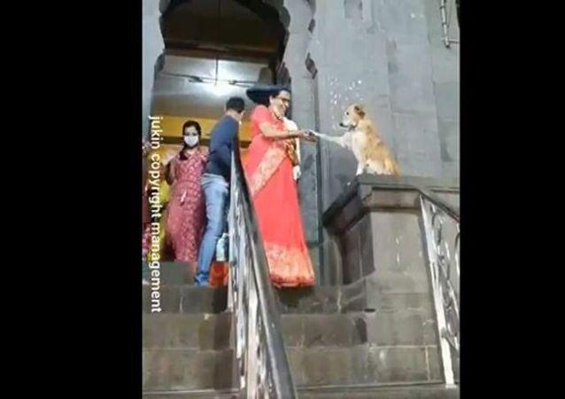Tapınağın girişinde oturan sokak köpeği insanları patisiyle 'kutsadı'