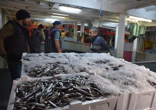 Rusya'da havaların soğumasıyla kaçan hamsinin, Karadeniz'de, Bulgaristan üzerinden İğneada'ya akın etmesi üzerine İstanbul, Trabzon, Samsun, Ordu, Çanakkale, Balıkesir, Tekirdağ gibi birçok ilden onlarca balıkçı teknesi de bölgeye geldi. İğneada'da denize açılan balıkçı teknelerinin hemen hepsi ağlarına takılan tonlarca hamsi ile limana döndü. Avlanan balıklar ise İğneada Limanı'ndan kamyonlara yüklenip, Türkiye'nin dört bir yanına gönderiliyor. 3 günde hamsi fiyatları da 35 liradan 15 liraya kadar düştü.