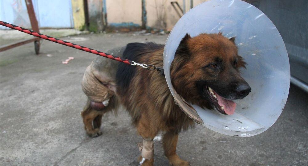 Samsun'da dükkanının önünde baktığı köpeğini ayağı kesik vaziyette bulan esnaf şikayetçi oldu