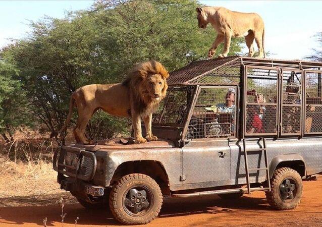Senegal, Ranch de Bandia doğal yaşam parkı