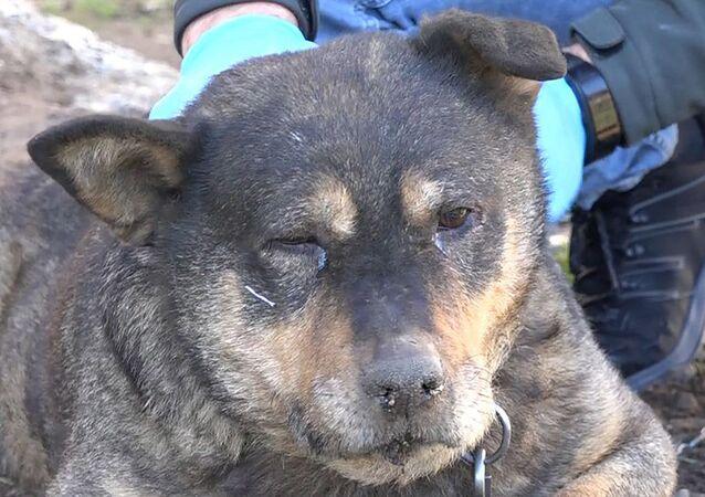 Ömercan Karkaç'ın Tony isimli köpeği