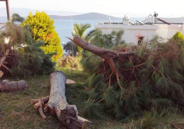 Muğla'da manzarayı engellediği gerekçesiyle kesilen ağaçlar