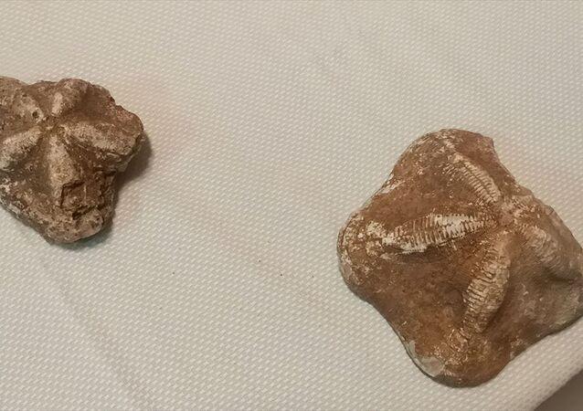 Çanakkale'de polisin düzenlediği operasyonda, 6 deniz yıldızı fosili ele geçirildi. Operasyonda 4 şüpheli gözaltına alındı.