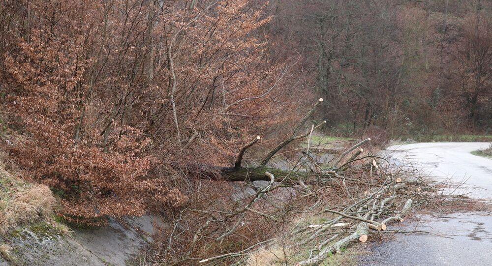 Bolu'da fırtına, ağaç
