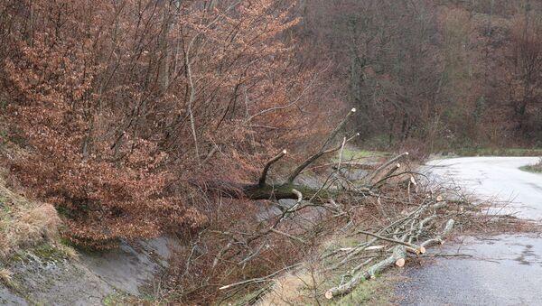 Bolu'da fırtına, ağaç  - Sputnik Türkiye