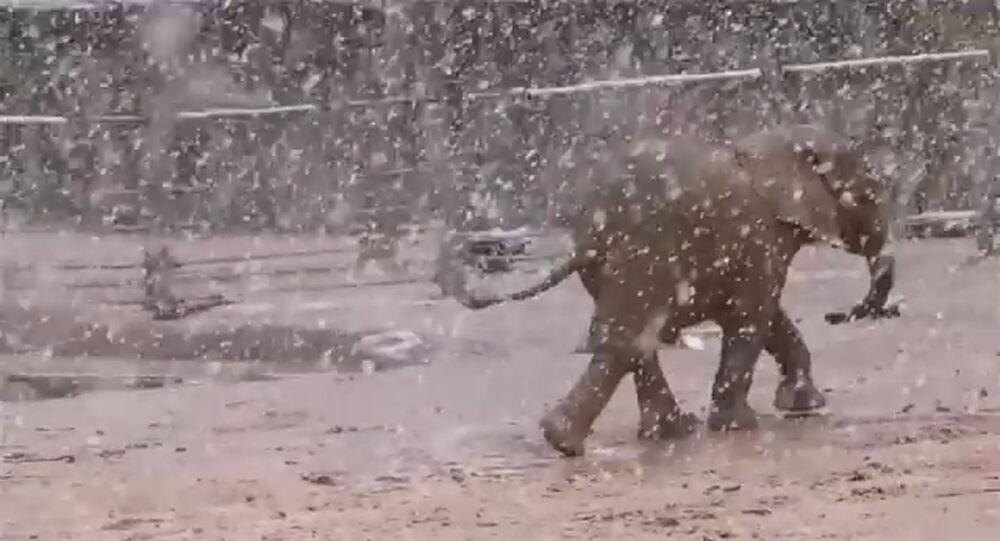 ABD'de filler yağan karın tadını böyle çıkarttı