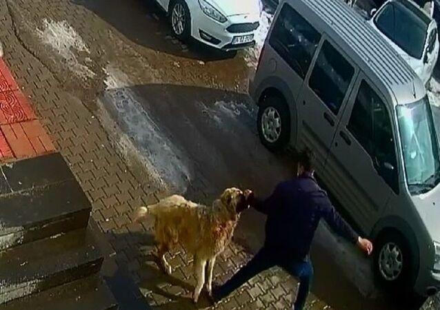 Köpek saldırısı-yumruk