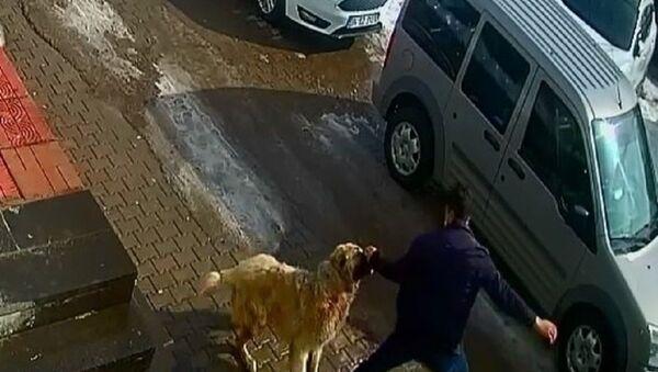 Köpek saldırısı-yumruk - Sputnik Türkiye