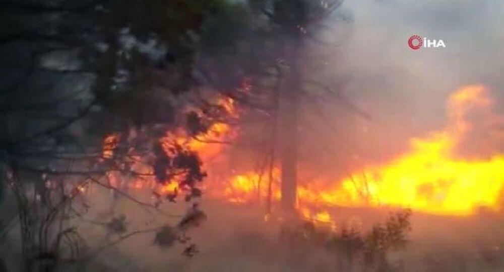 Arjantin'deki yangında 10 bin hektar ormanlık alan küle döndü