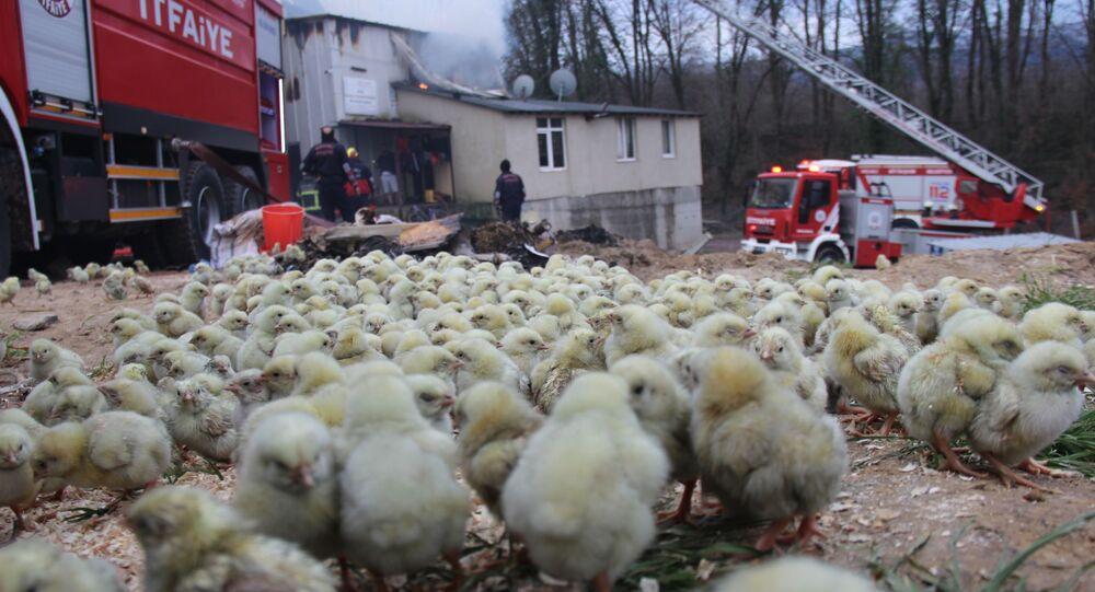 56 bin civcivin bulunduğu çiftlikte yangın, Kocaeli