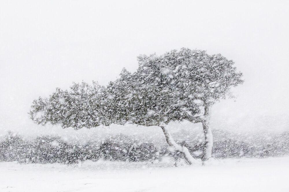 Yarışmanın Manzaralar kategorisinin kazananı İtalyan fotoğrafçı Alessandro Carboni'nin çalışması