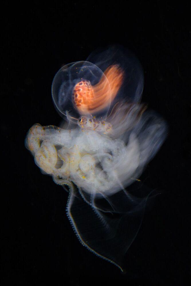 Yarışmanın Doğa, Deniz Yaşamı, Vahşi Yaşam Portfolyo kategorisinin kazananı Avusturyalı fotoğrafçı Marco Steiner'in çalışması