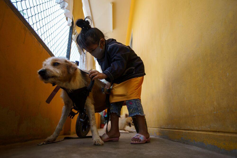 Barınağın, 600'den fazla köpeğin bakımı için her gün 1300 dolardan fazla para harcadığı belirtiliyor.
