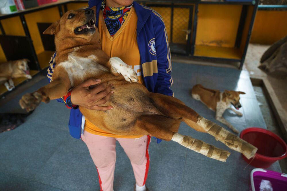 Bakıcılardan Phanuphong Borphuak, tekerlekli yürüteçleri kastederek, Onları ayaklarına bağlamamız için can atıyorlar adeta dedi.