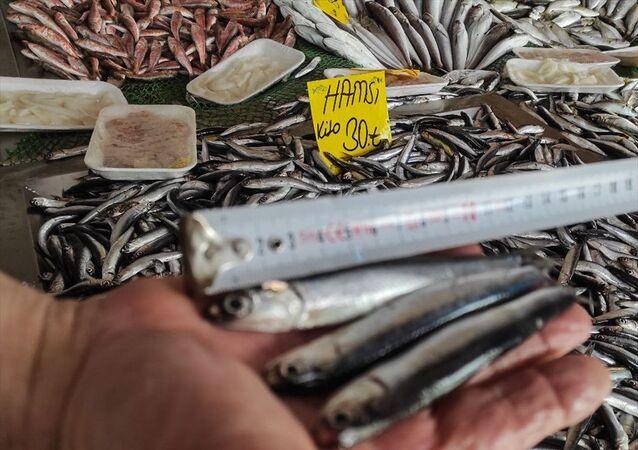 hamsi, balık pazarı