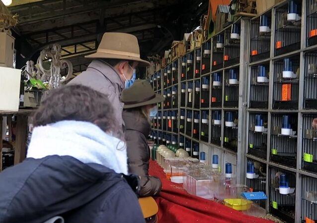 Paris'teki 140 yıllık kuş pazarı kapanıyor