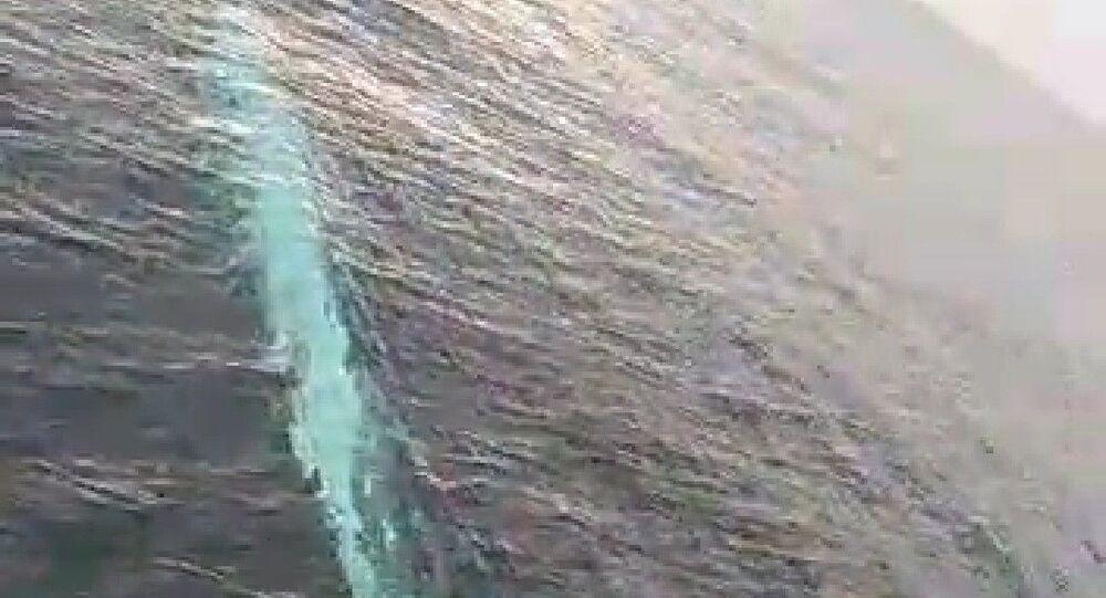 Akdeniz'de 15 metrelik oluklu balina görüntülendi