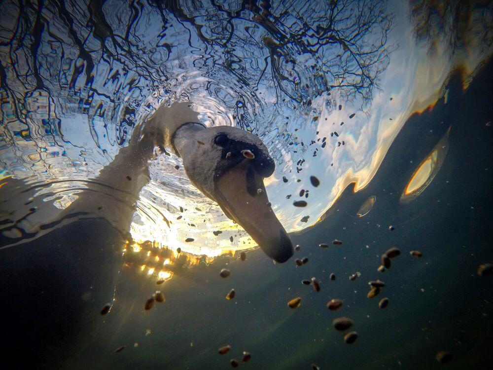 Yarışmanın İngiliz Suları Kompakt kategorisinin kazananı İngiliz fotoğrafçı Ian Wade'nin fotoğrafı