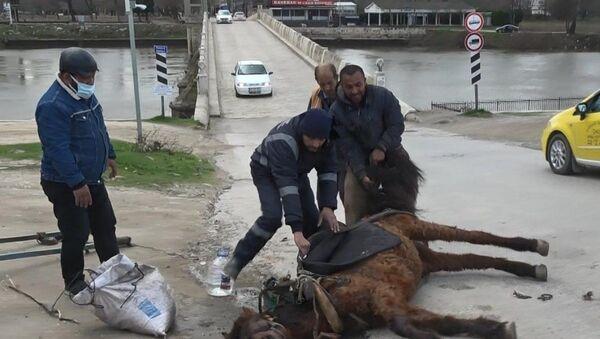 Aşırı yüke dayanamayan at yere yığıldı: Sahibi başına su döküp kuyruğundan sürükledi - Sputnik Türkiye