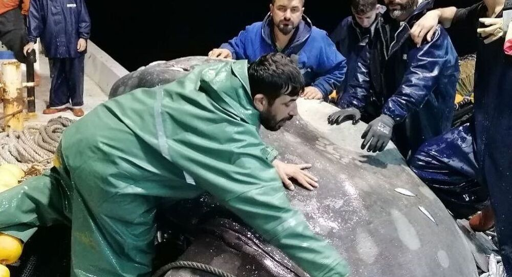 ay balığı