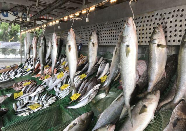Kofana balığı