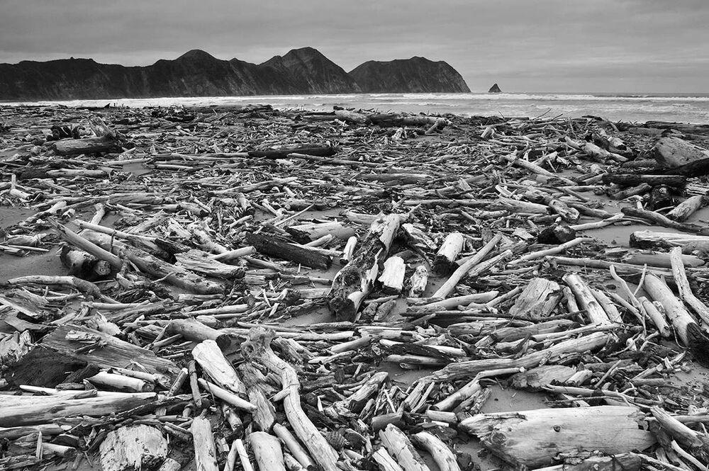 Uluslararası Yılın Bahçe Fotoğrafçısı Yarışması'nın (IGPOTY-14) Bitkiler&Gezegen kategorisinde birincilik ödülünü kazanan Yeni Zelandalı fotoğrafçı Jonathan Barran'ın fotoğrafı Yeni Zelanda'nın Kuzey Adasındaki Tolaga Koyu'nda çekildi
