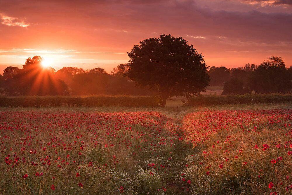 Yarışmanın Kır Çiçekli Manzaralar kategorisinin kazananı  İngiliz fotoğrafçı Simon Lea'nın Haşhaş Tarlası başlıklı görüntüsü, İngiltere'nin Coven kentinde çekildi