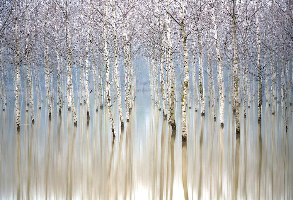 Uluslararası Yılın Bahçe Fotoğrafçısı Yarışması'nın (IGPOTY-14) Ağaçlar&Ormanlar kategorisinin kazananı  fotoğrafçı Gianluca Gianferrari'nin çalışması