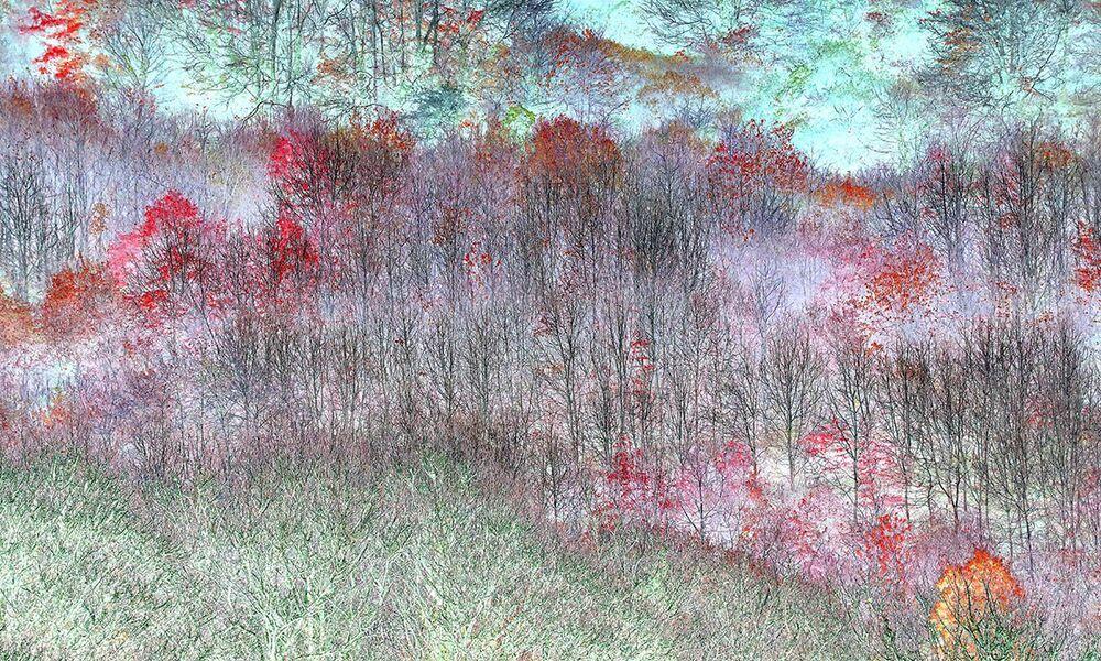 Uluslararası Yılın Bahçe Fotoğrafçısı Yarışması'nın (IGPOTY-14) Soyut Görüntüler kategorisinin kazananı İngiliz fotoğrafçı Claire Ogden'in Sihirli Ağaçlar başlıklı çalışması
