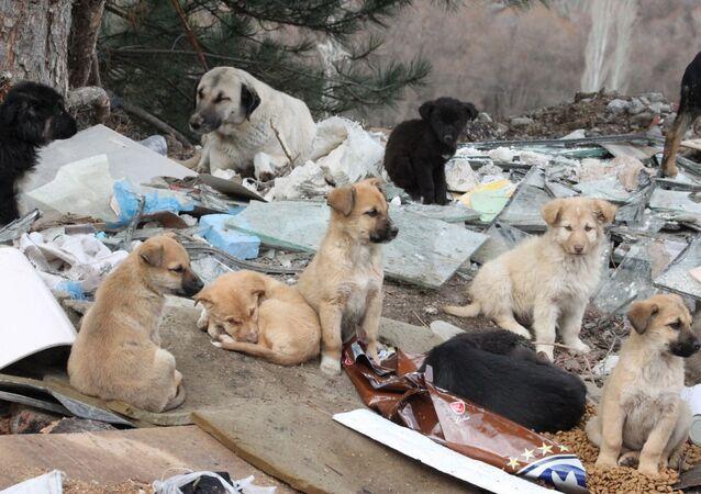 Ankara'da dağlık alana terk edilen 7 köpek öldü