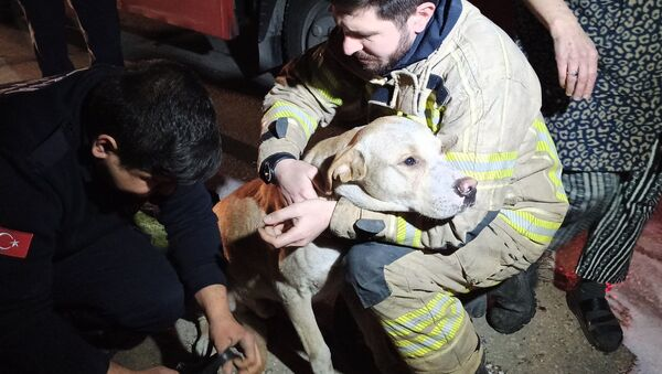 Bursa'da bir mobilya atölyesinde çıkan yangında dumanların arasında mahsur kalarak ölmek üzere olan köpek, itfaiye ekipleri tarafından kurtarıldı.  - Sputnik Türkiye