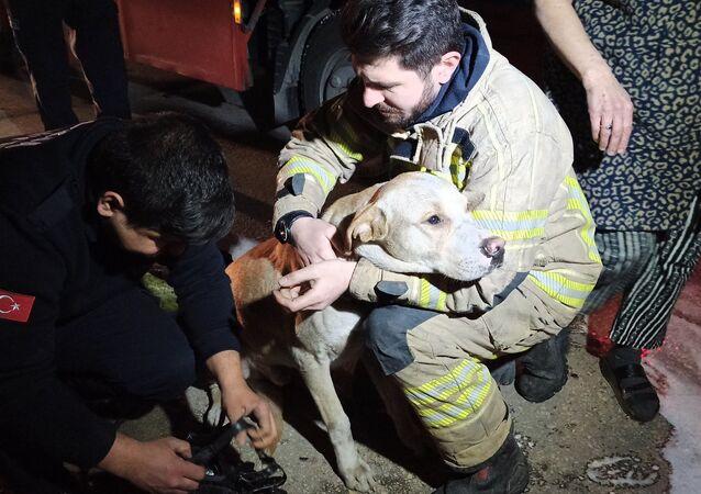Bursa'da bir mobilya atölyesinde çıkan yangında dumanların arasında mahsur kalarak ölmek üzere olan köpek, itfaiye ekipleri tarafından kurtarıldı.