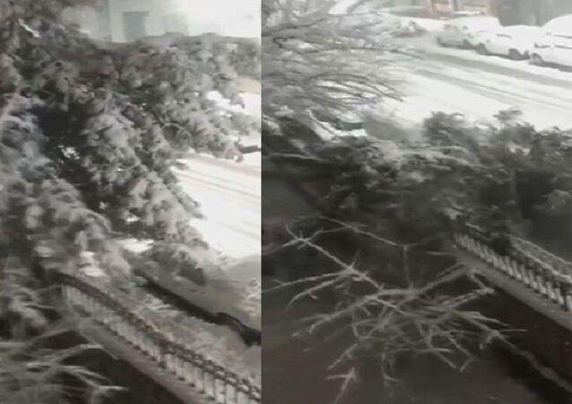 Sultangazi'de otomobilin üstüne devrilen ağaç