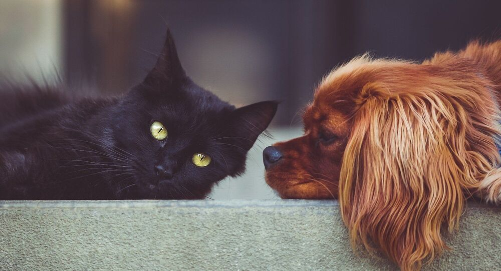 kedi, köpek